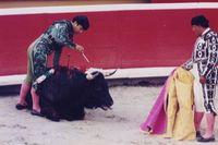 Bullfight106