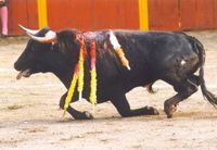Bullfight5