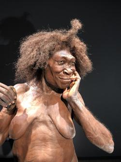 768px-Naturalis-Homo-Erectus-Dubois